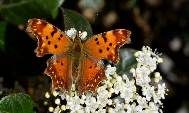 EPA Administrator Signs Proclamation Marking National Pollinator Week