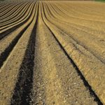Department of Agriculture warns against unsolicited seeds from foreign countries