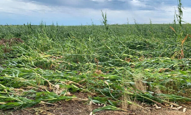 NEWSMAKER: Windstorm damages a third of Iowa's crops