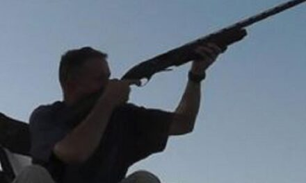 Dove hunting opens at Swan Lake NWR