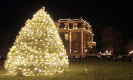 Too-big-for-yard Norway spruce to adorn Governor's yard for Christmas