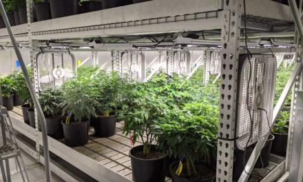 Things turning up green for Carrollton's marijuana industry