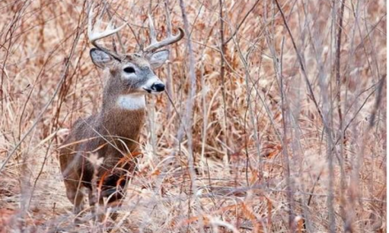 14,555 deer harvested during alternative-methods portion
