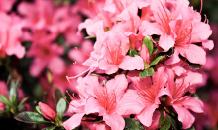 'Don't jump the gun' to prune shrubs, MU Extension says