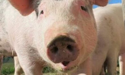 Proposers of CAFO pull application in Livingston County