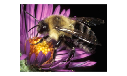 'Bee' mindful of pollinators when spraying fruit crops