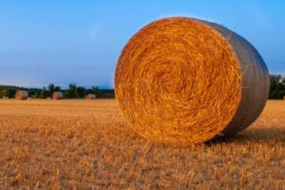 Be aware of hay scams when buying and selling online