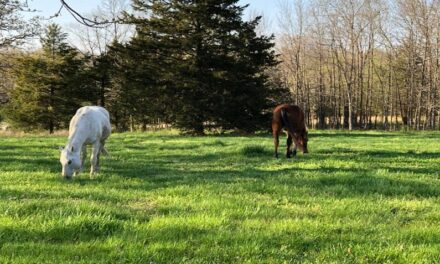 Missouri Forget Me Not Horse Rescue and Sanctuary offers adoption and refuge to horses