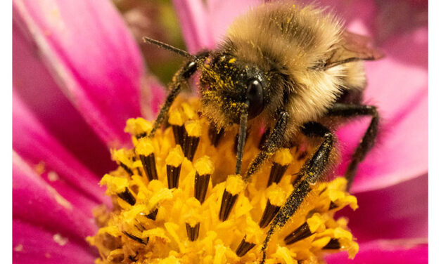 Celebrating Pollinator Week with MU Extension horticulture specialists