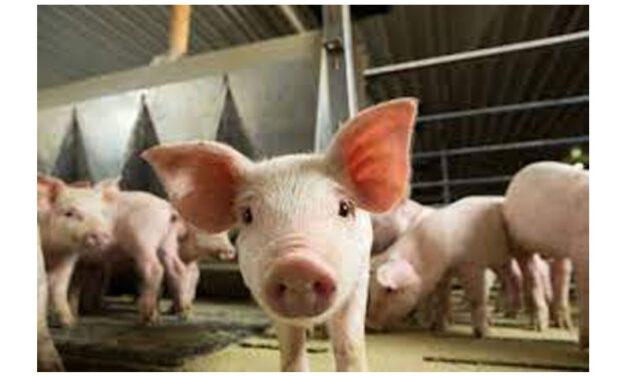 USDA hosts African Swine Fever Action Week
